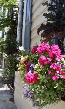 Historic area of Charleston, SC