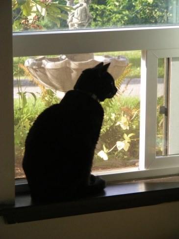 Looking outside for squirrels