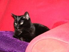 Comfy on the sofa