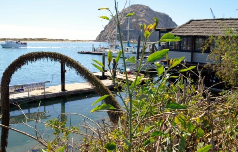 Morro Bay area, California ~Photos