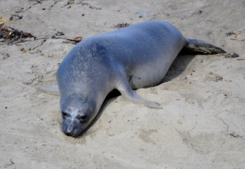25. Seal at rest ..