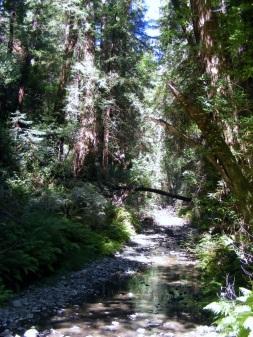 Muir Woods 4