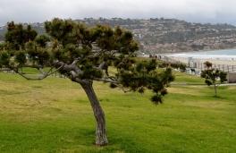 Redondo Beach ... overlooking ocean
