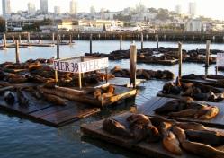Walk along the Pier