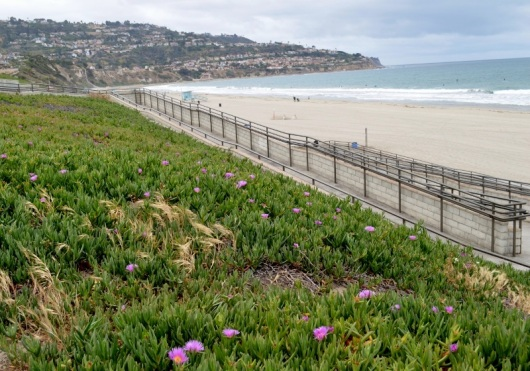 Walkway to ocean ...