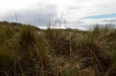24 Neahkahnie Beach