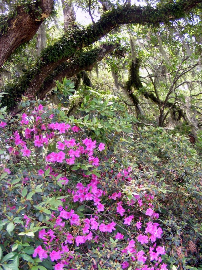 Brookgreen Gardens, South Carolina ~Photos