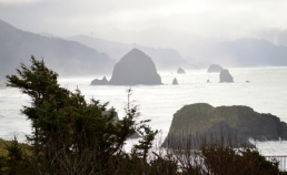 37 Ecola State Park