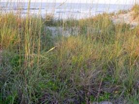 Isle of Palms Beach SC 25