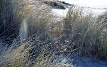 Manzanita Beach 6