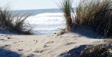Manzanita Beach 8