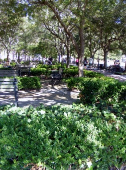 Charleston_Park_many_benches_shade