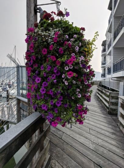 Gig Harbor_15