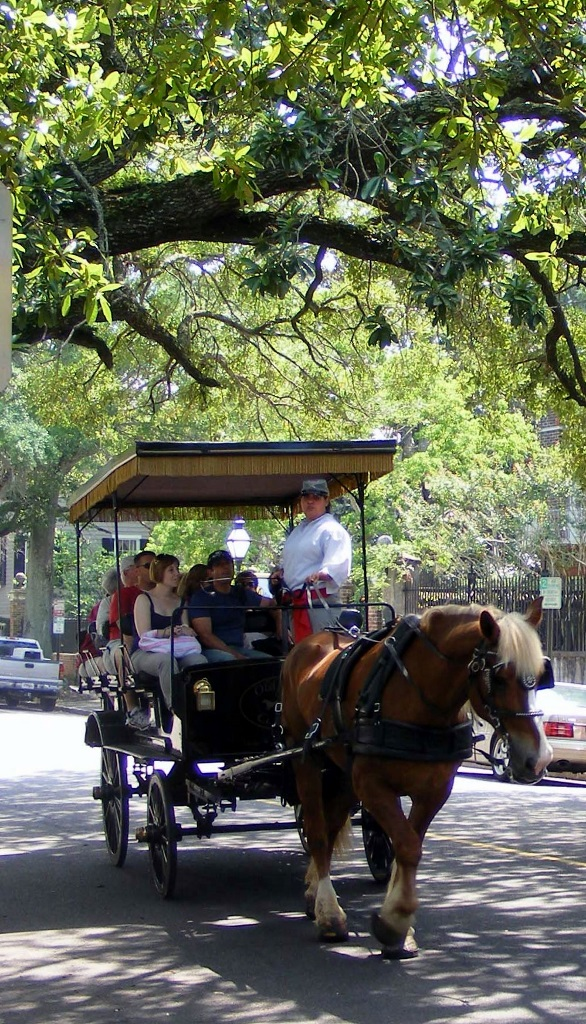 Historic Charleston, SC ~ Photos