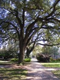 Historic area 48