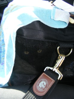 Shadow in carrying case