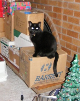 Shadow ~ Supervising the move