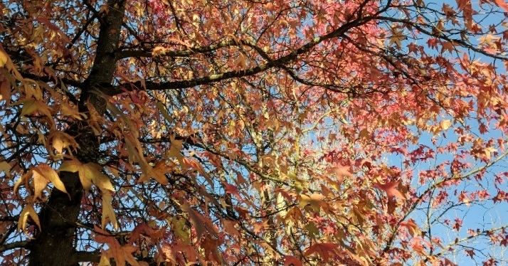Photos: The Waning Days of Autumn, Gig Harbor, WA