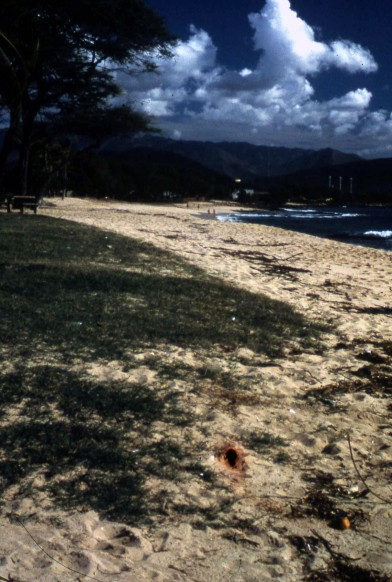 Hawaii_NorthShore