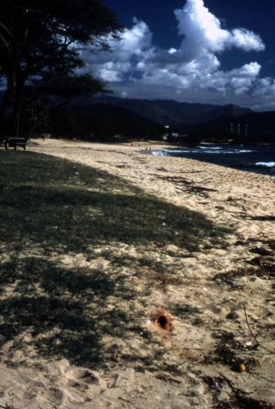 Hawaii_NorthShore