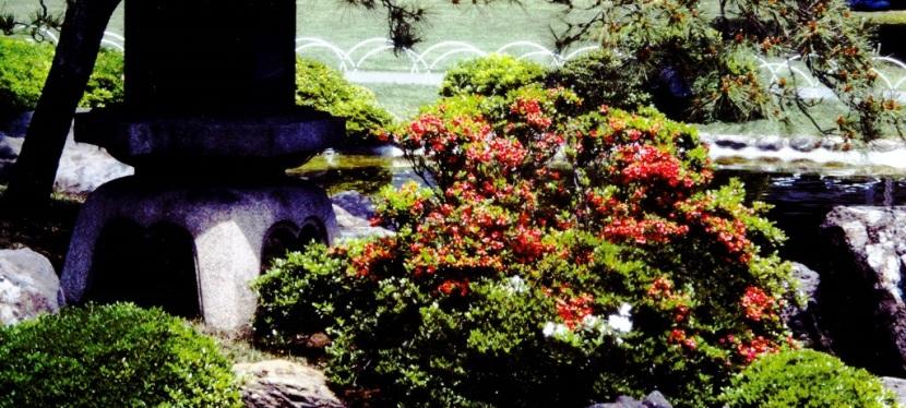 Travel Memoir ~Japan