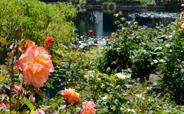 Photos ~ Self-Realization Fellowship Lake Shrine ~ Pacific Palisades, CA