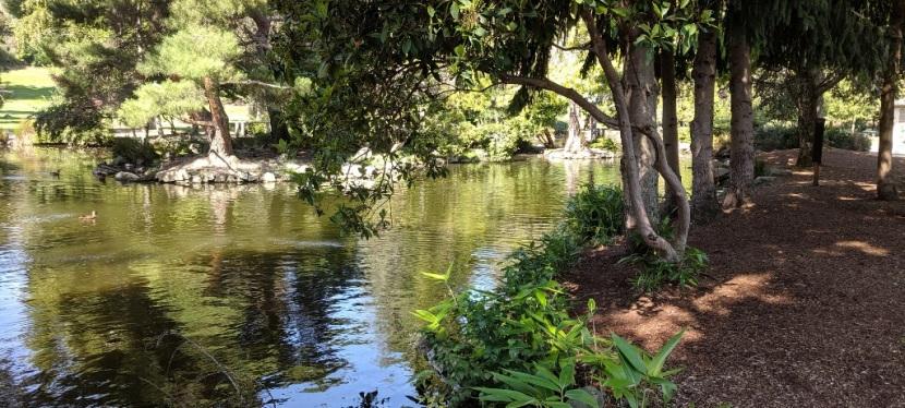 Duck Pond, Point Defiance Park, Tacoma WA ~Photos