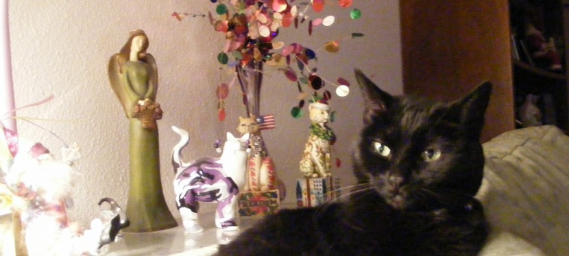 Memories of Feline Friends ~ Shadow ~ A Very Special Cat  (Part 4) — Katzenworld
