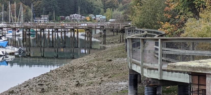 Photos ~ A Misty Fall Day ~ Bainbridge Island,Washington