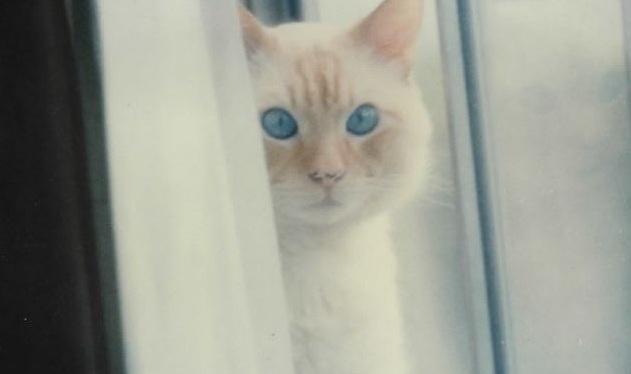 More Cat Quotes ~ Photos ~ Dec2020