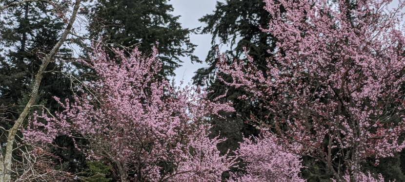 Spring Starts to Bloom ~ Photos, Gig Harbor, WA