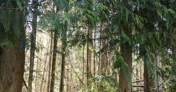A Walk with Nature ~ Photos, Gig Harbor, WA