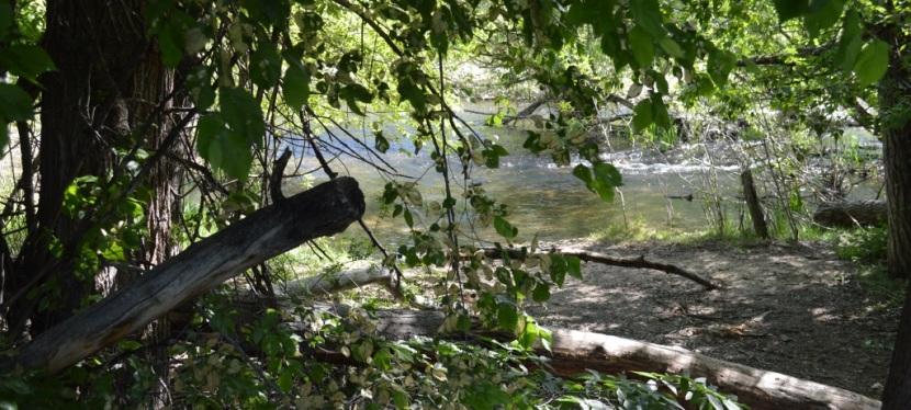 A Walk Along Boise River Greenbelt ~ Boise, ID ~ Photos ~Quotes