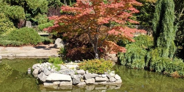 Gardens, Including Japanese Garden ~ Point Defiance Park, Tacoma WA ~Photos