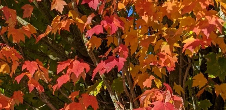 Autumn Colors ~ Gig Harbor, WA ~ Photos ~ Quotes ~ October2021